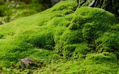 De ce sa aleg lichenii stabilizati?